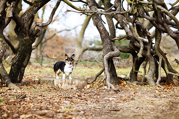 Sacramento-dog-photographer