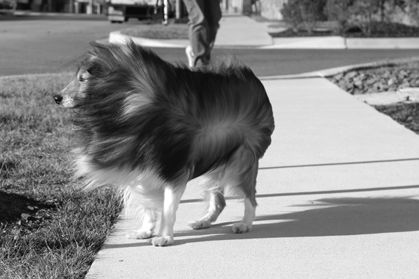 DC-area-dog-photographer