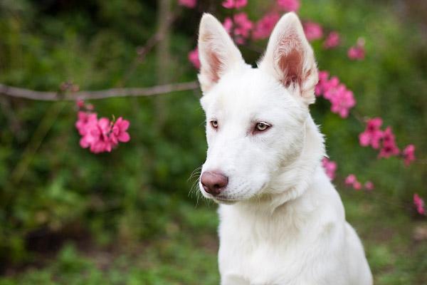 Puppy Love:  Cosmo