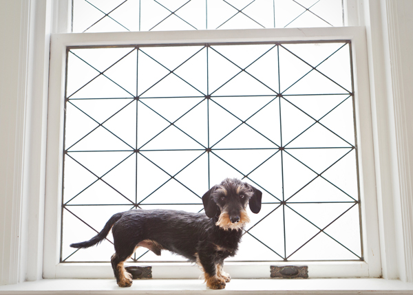 miniature-wirehaired-doxie-on-windowsill, creative-dog-portraits