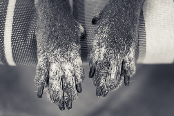 front-paws-detail