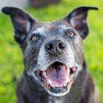 sweet-senior-dog