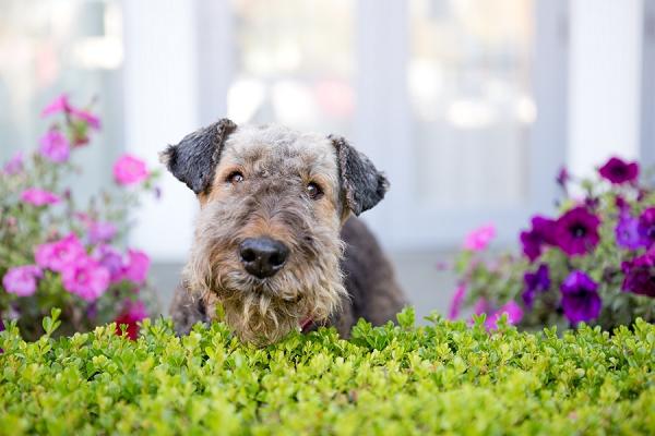Sunshade-happy-dog
