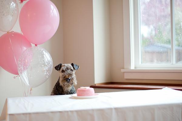 dog's-birthday-portrait,