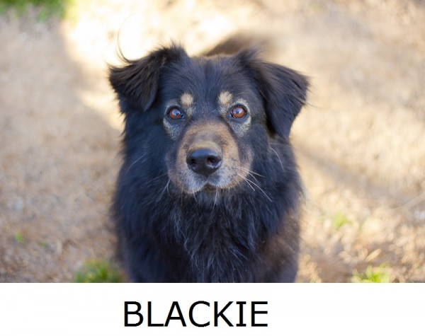 Adopt-Blackie, Richmond-VA-dog-portraits