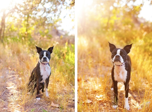 on-location-pet-photography-for-doglovers