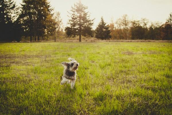 adorable-dog-photography