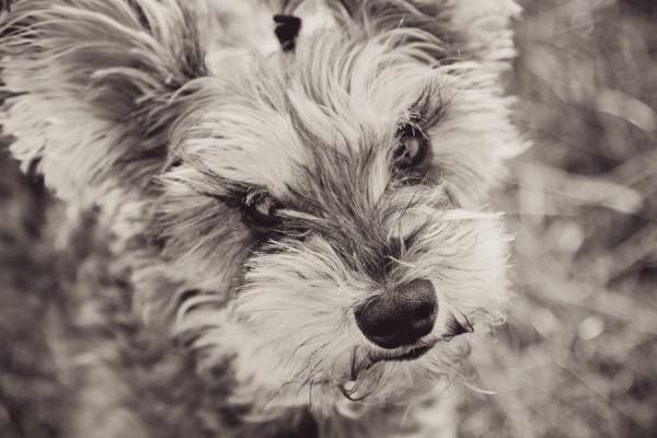 WA-dog-photograhy, adorable-pup