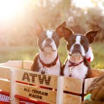 fall-dog-photography