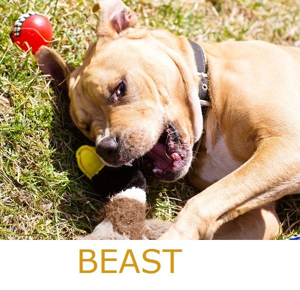 RBP-Beast1