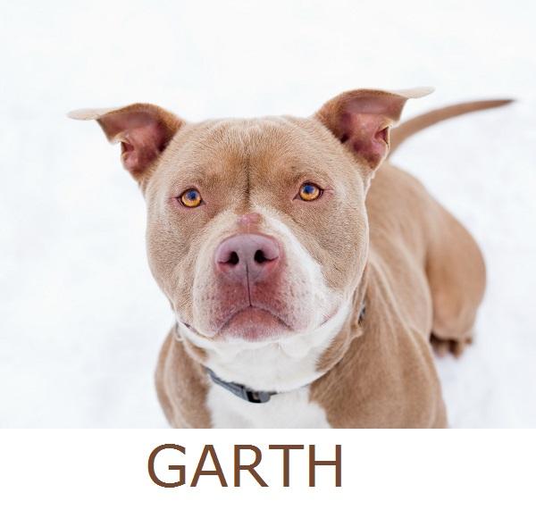 Adopt-Garth!  Herkimer-County-Humane-Society