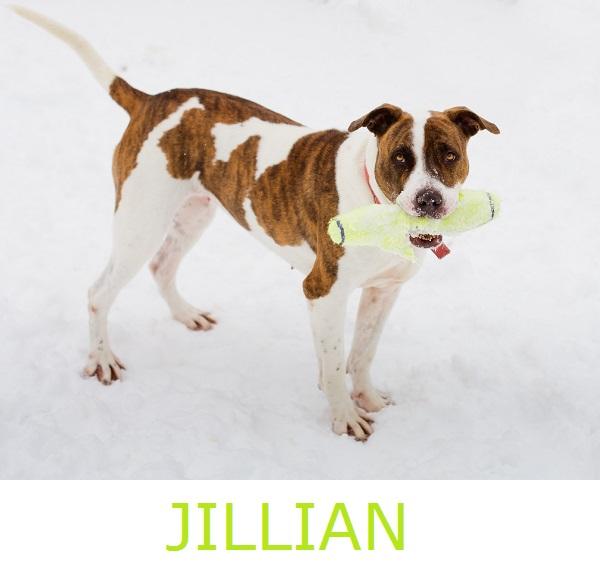 Adopt-Jillian!