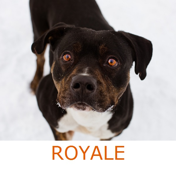 Adopt-Royale!  Herkimer-County-photography