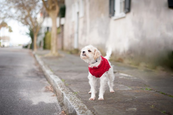 Charleston-modern-dog-photography
