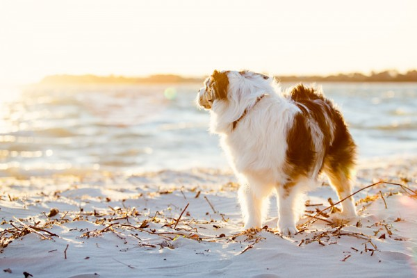 Charlotte Reeves Photography-guide-to-creative-dog-photography