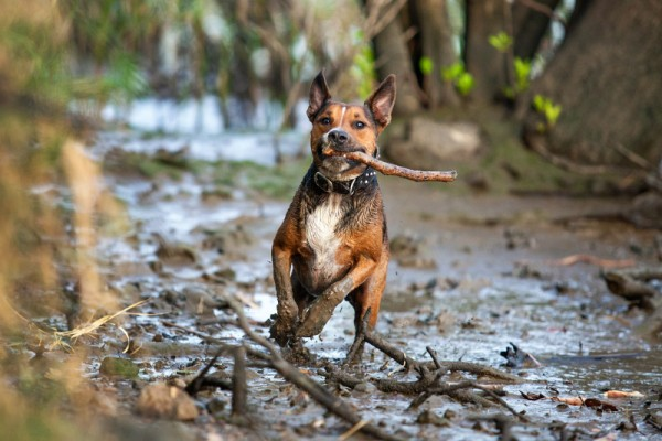 Charlotte Reeves-guide-to-creative-dog-photography