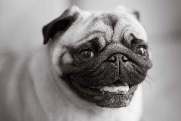 Bicoastal-dog-photographer