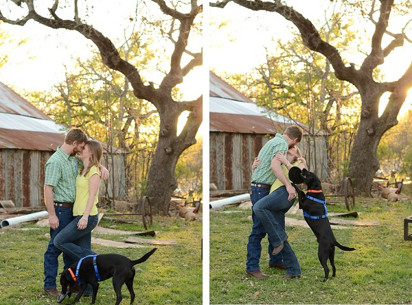 engagement-photos-with-Labrador-mix