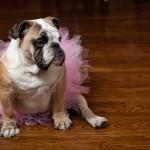 breast-cancer-awareness-dog
