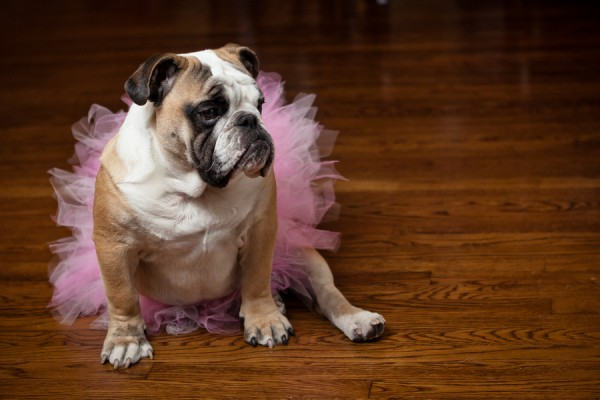 breast-cancer-awareness-dog