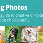 Guide-to creative-dog-photography