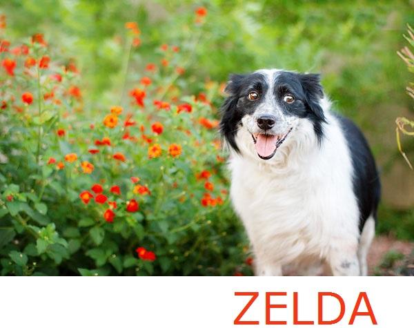 © Kira DeDecker Photography, adoptable-sweet-deaf-senior-dog