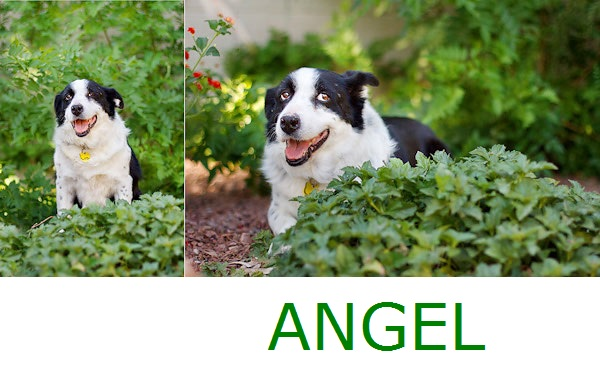 © Kira DeDecker Photography, Adoptable-Border-Collie