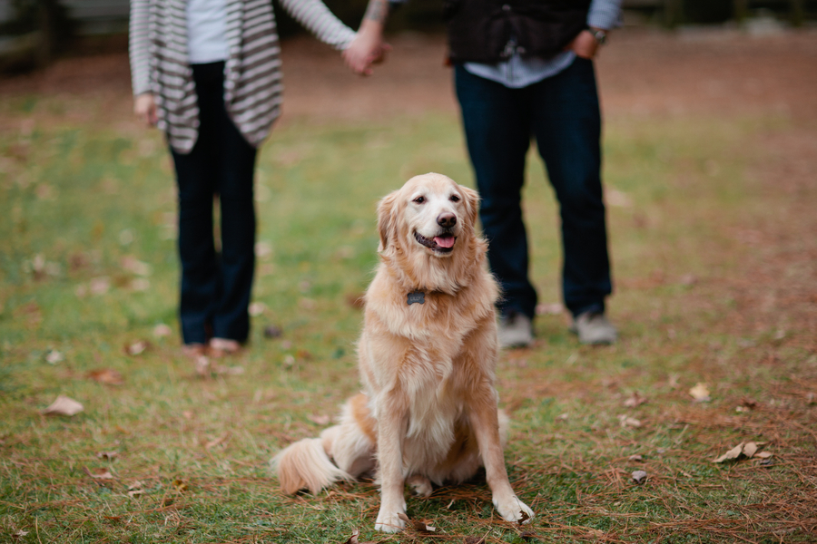© Lauryn Galloway Photography, Retriever-love