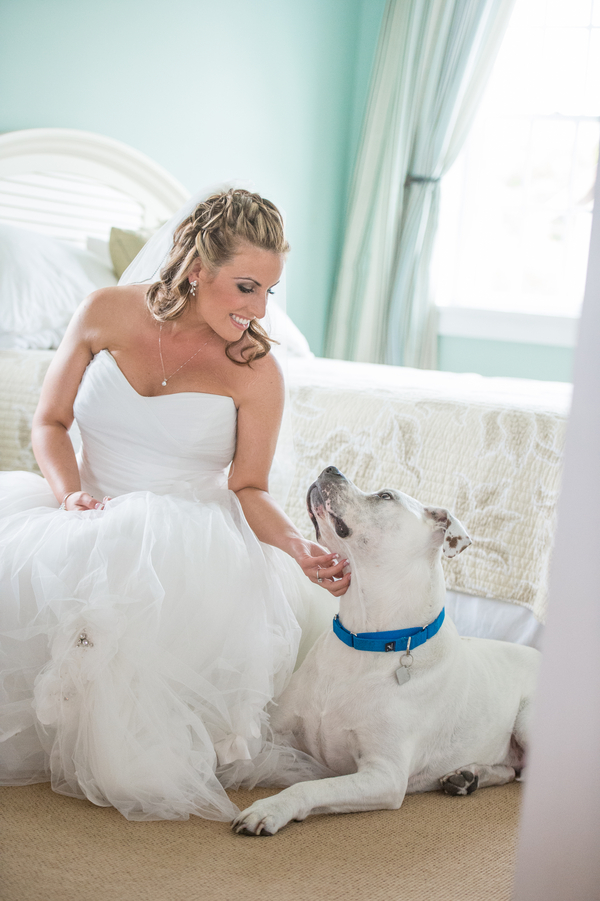 Best-dog, bride-and-Pit-bull