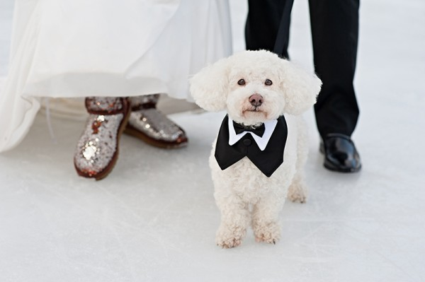 Best-dog-wedding-photography