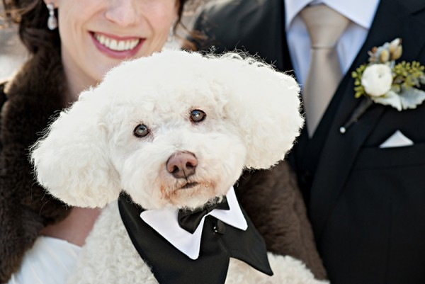 Best-Dog-at-wedding
