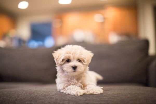 VA-portrait-photographer, puppy-love