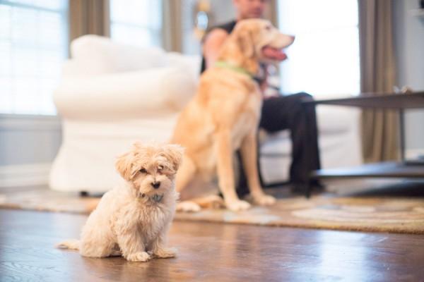 lifestyle-family-and-dog-photographer