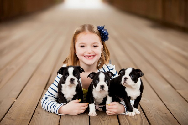 girl-and-Boston-Terrier-puppies