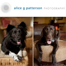 SyracusePetPhotography