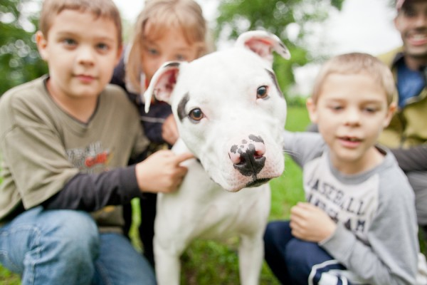 Adopt Duncan from Minnesota-Pit-Bull-Rescue