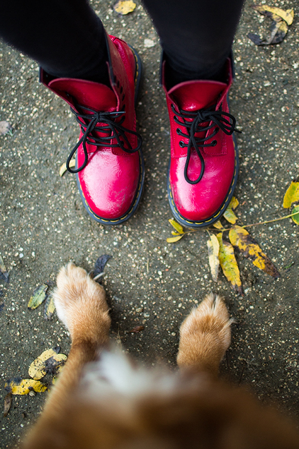© Anthony Helton, Purple Collar Pet Photography, paws-and-boots
