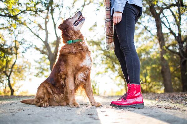 © Anthony Helton, Purple Collar Pet Photography, modern-dog-photography,