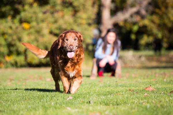 © Anthony Helton, Purple Collar Pet Photography, Senior-dog-portraits