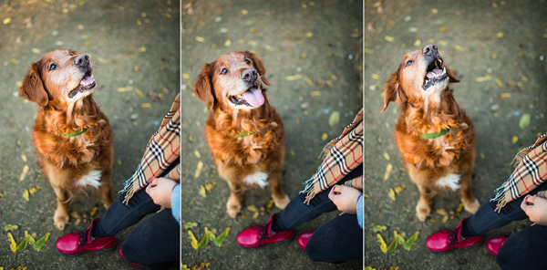 © Anthony Helton, Purple Collar Pet Photography, handsome-dog