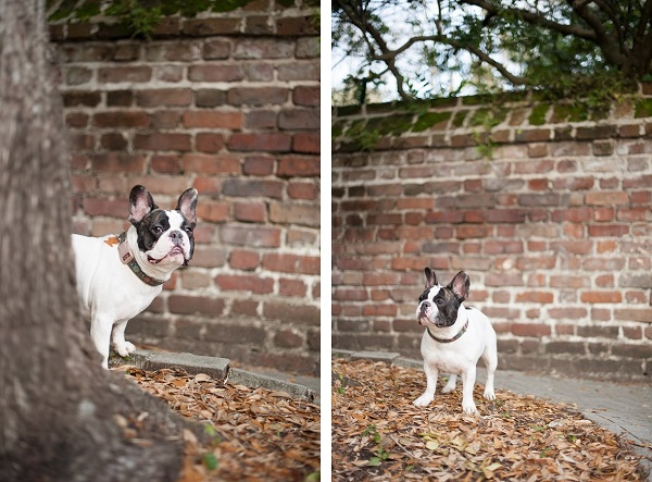 © Britt Croft Photography, Frenchie