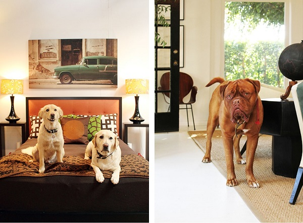 © Bethany Nauert Photography, dogs-in-beautiful-homes