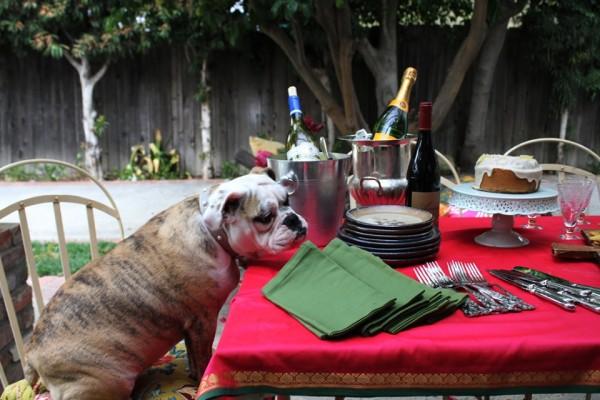 © Bethany Nauert Photography, Peaches-English-Bulldog
