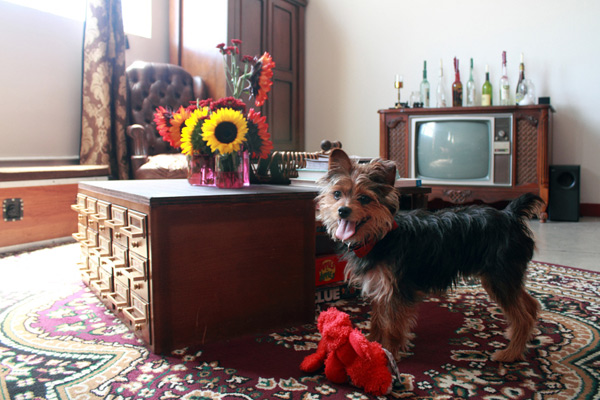 © Bethany Nauert Photography, dog-makes-home-complete