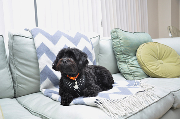 © Bethany Nauert Photography, dogs-belong-on-furniture