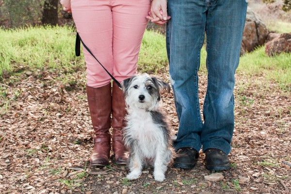 © Katie Jackson Photography, engagement-session-with-Terrier-mix