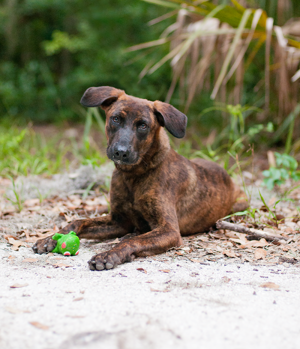 © Emma Grace Photography, adoptable-mixed-breed-All-Dog-Rescue