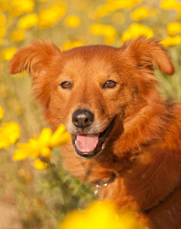 © Fetchlight Photography, orange-mixed-breed, dog-lifestyle-photography