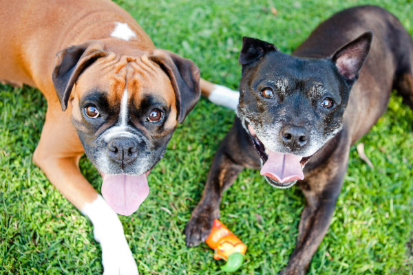 Happy Tails:  Finn and Ellie