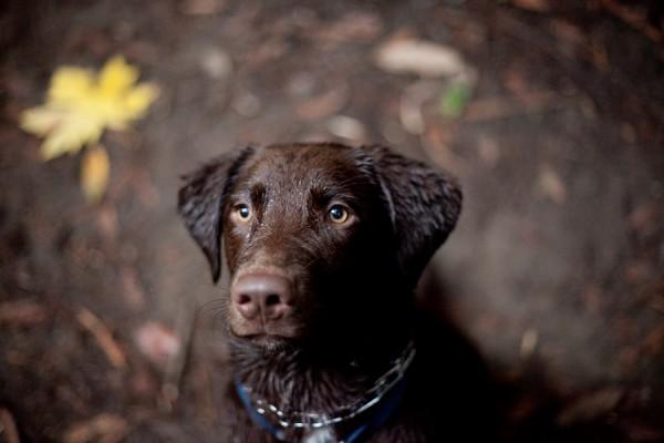 © Kim J Martin Photography, wet-Chocolate-Lab-mix